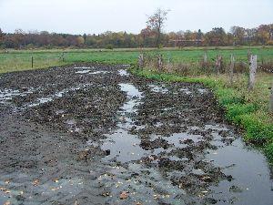 Matschige Weiden sind ein Paradies für die Zwergschlammschnecke