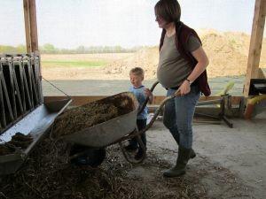 Chalmydien im Kuhstall können für schwangere Frauen gefährlich werden