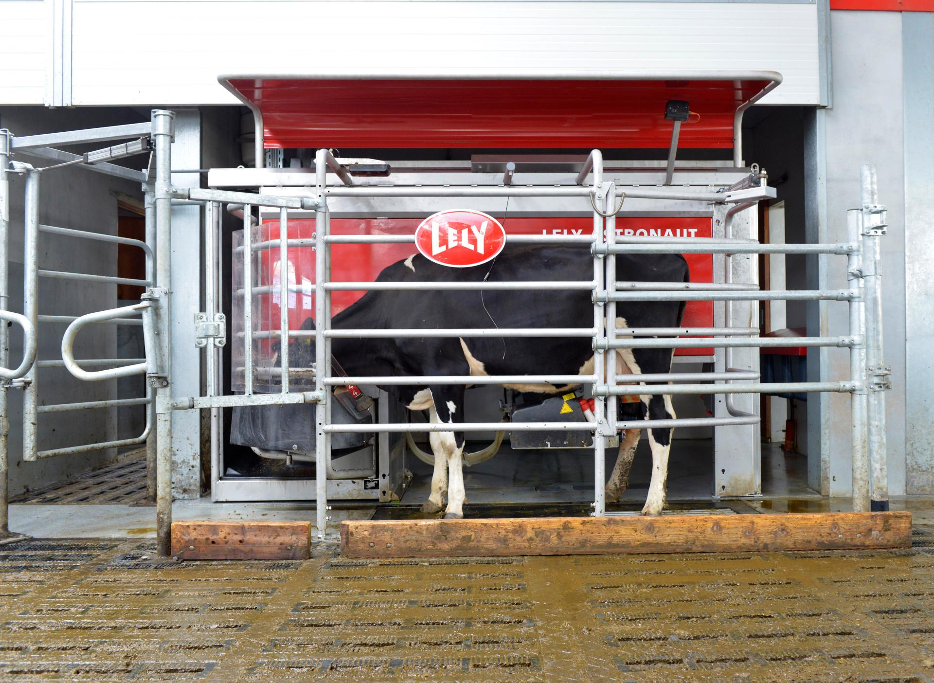 Kuhgesundheit im automatischen Melksystem Fortbildungsveranstaltung für Tierärzte im April 2019